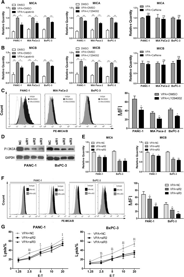 PI3K/Akt signaling is required for VPA-induced upregulation of MICA and MICB in pancreatic cancer cells. (A, B) Quantitative real-time RT-PCR analysis. The VPA-induced upregulation of MICA and MICB mRNA expression were inhibited by the HER2/HER3 inhibitor <t>lapatinib</t> and the PI3K inhibitor LY294002, but not by the ATM/ATR inhibitor caffeine. Data are mean ± SD of a single experiment performed in triplicate, all results were reproducible in three independent experiments. * P