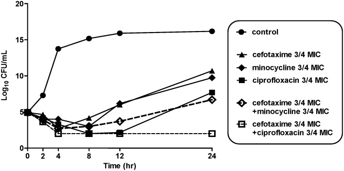 Time-kill curves for V. vulnificus CMCP6 after incubation with 3/4 MICs of <t>cefotaxime</t> alone, minocycline alone, ciprofloxacin alone, cefotaxime-plus-ciprofloxacin or cefotaxime-plus-minocycline. CFU, colony-forming unit; MIC, minimum inhibitory concentration.