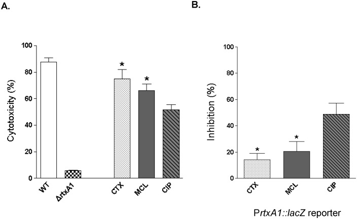 The effects of sub-inhibitory concentrations of antibiotics on V. vulnificus cytotoxicity and rtxA1 transcription. A. Cytotoxicity assay. The impaired cytotoxicity of ΔrtxA1 compared with that of the WT strain shows that cytotoxicity at 120 min is due principally to RtxA1. V. vulnificus cytotoxicity is inhibited more markedly by 1/4 MIC of ciprofloxacin than by 1/4 MICs of cefotaxime or minocycline (n = 12 per group). B. Transcriptional reporter assay. The transcription of rtxA1 is more efficiently inhibited by 1/4 MIC of ciprofloxacin than by 1/4 MICs of cefotaxime or minocycline (n = 4 per group). WT, MO6-24/O; ΔrtxA1 , CMM770 (MO6-24/O background with a deletion mutation in the rtxA1 gene); CTX, cefotaxime; CIP, ciprofloxacin; MCL, minocycline. * P