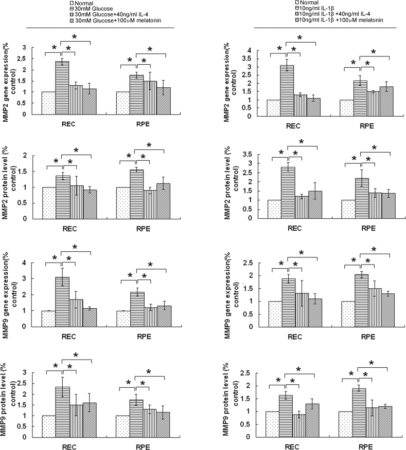 Interleukin-4 (IL-4) and melatonin downregulated the expression of matrix metalloproteinases 2 (MMP2) and matrix metalloproteinases 9 (MMP9). Human retinal endothelial cells (RECs) and retinal pigment epithelial (RPE) cells were cultured for 24 h (interleukin-1β [IL-1β] stimulation) or 48 h (D-glucose stimulation) with or without IL-4 (40 ng/ml) or melatonin (100 μM). The mRNA and protein levels of the MMP2 and MMP9 genes were analyzed with quantitative real-time PCR (qPCR) and enzyme-linked immunosorbent assay (ELISA), respectively. The expression of MMP2 and MMP9 was significantly decreased by IL-4 and melatonin in human RECs and RPE cells induced by D-glucose or IL-1β. The data are expressed as the mean±standard deviation (SD; n = 3; *p