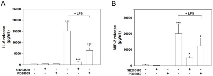 Effects of MAPK inhibitors on LPS-induced IL-6 and MIP-2 production. Cocultured cells were treated with 20 µM of the p38 inhibitor SB203580 or the ERK inhibitor PD98059, which were simultaneously added with LPS (100 ng/ml) for 24 h. The levels of IL-6 (A) and MIP-2 (B) in the medium were measured using ELISA kits. Both inhibitors significantly suppressed both the LPS stimulated release of IL-6 and MIP-2. The data are represented as mean ± SEM based on 4–6 independent experiments. * p