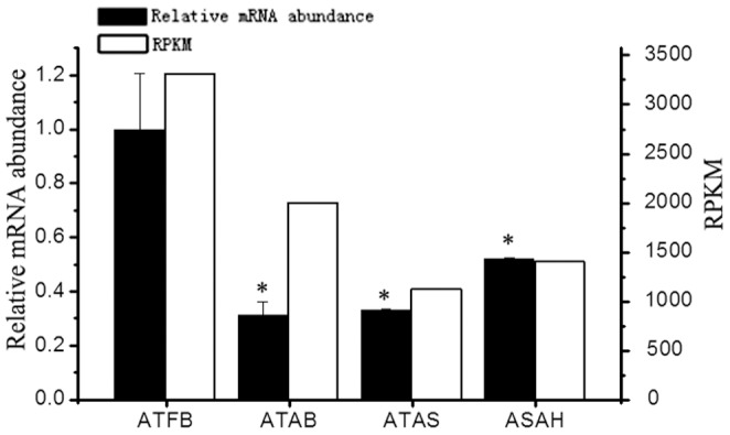 The expression of GAPDH in the four adipose tissues detected by RT-qPCR and RNA-seq. Note: ATFB: adipose tissues of fetal bovines; ATAB: adipose tissues of adult bulls; ATAS: adipose tissues of adult steers; ATAH: adipose tissues of adult heifers. *: P