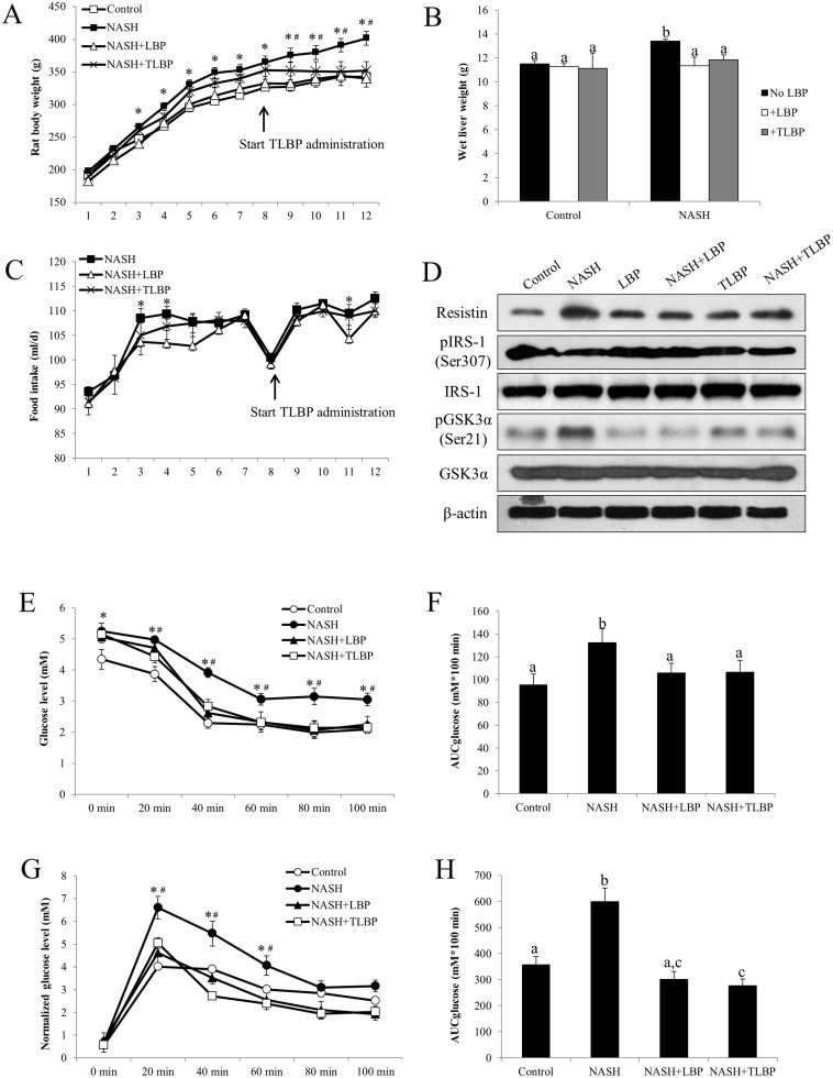 LBP therapeutically improved NASH-induced obesity, insulin resistance and glucose metabolism dysfunction. (a) The body weight of each rat was recorded every week throughout the 12-week high-fat diet induction of NASH. (b) After the induction, the wet liver weight was weighed for each rat. (c) The food intake of each rat (in ml/d) was recorded everyday throughout the 12-week high-fat diet induction of NASH. Each dot represents the average food intake of a week. (d) Representative Western blot results of resistin, phosphorylated IRS-1, total IRS-1, phosphorylated GSK3α, and total GSK3α in all group of rats from 3 repeated Western blot experiments. (e) Blood glucose level was assessed after an intraperitoneal (i.p.) injection with recombinant insulin (a fixed bolus of 0.17 IU) and the serum glucose level was recorded 0, 20, 40, 60, 80, and 100 min later after the 12-week induction of NASH. (f) Area under the curve for glucose (AUCglucose) was calculated using the trapezoidal rule. (g) Blood glucose level of each rat was recorded 0, 20, 40, 60, 80, and 100 min after an i.p. injection of D-glucose (a fixed bolus of 350 mg) after the 12-week induction of NASH. Data were normalized with basal glucose levels. (h) AUCglucose was calculated using the trapezoidal rule. Data from each group were expressed as means ± SEMs (n = 6). Statistical comparisons between groups were done using the Kruskal–Wallis test followed by Dunn's post hoc test to detect differences in all groups. A p
