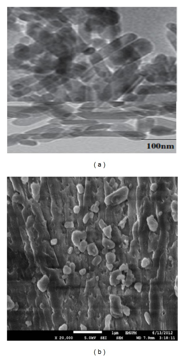 (a) TEM micrograph of the Dox-loaded rod-shape nanocrystals and (b) FESEM micrograph of CaCO 3 /Dox nanocrystals.