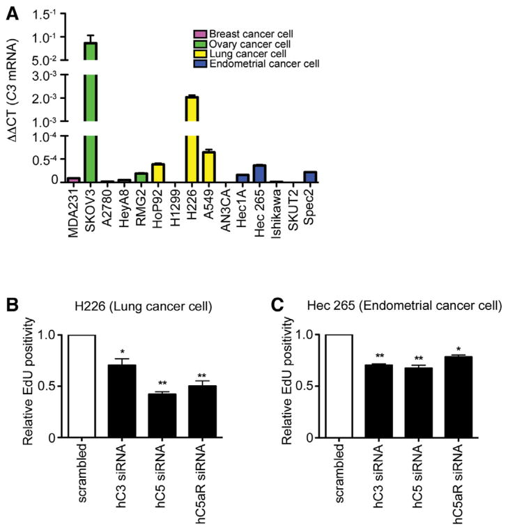 Cancer Cells Originated from Different Organs Secrete Complement Proteins that Enhance Cell Proliferation (A) Quantification of C3 mRNA in h breast, ovarian, lung, and endometrium cancer cell lines using quantitative real-time PCR (n = 3). (B and C) Reducing C3 gene expression in (B) H226 human squamous cell lung cancer and in (C) Hec265 human endometrium cancer cell lines using C3 siRNA reduced proliferation, migration, and invasion of these cells in vitro. Results of three independent experiments (each of them in triplicate) are summarized as bar graphs (*p ≤ 0.01 and **p ≤ 0.001, t test). (D) The relative abundance of AKT mRNA in total mRNA isolated from SKOV3ip1 cells after 24 hr exposure to C3aR and C5aR agonists was quantified by quantitative real-time PCR, and the result of three experiments are summarized as bar graphs (*p ≤ 0.001). (E) A representative immunoblot on total cell lysate prepared from SKOV3ip1 cells after 48 hr exposure to C3aR and C5aR agonists and inhibitors using antibodies to p-85, AKT, and their phosphorylated forms (n = 3). (F) Immunostaining of tumors induced by ID8-VEGF cells expressing scrambled shRNA or mC3 shRNA in C57BL/6 mice using anti-pAKT antibody. (G) To investigate the effect of AKT or PI3K silencing on C3aR and C5aR agonist-induced enhancement of SKOV3ip1 proliferation, expression of AKT or PI3K in SKOV3ip1 was reduced using AKT or PI3K siRNA (data not shown), and cell proliferation was quantified 48 hr after exposure to C3aR-AG and C5aR-AG and was compared to SKOV3ip1 cells transfected with scrambled siRNA (n = 3; *p ≤ 0.001). (H) C3 mRNA level in the tumor specimens of 75 patients diagnosed with ovarian cancer in MDACC was determined using quantitative real-time PCR and correlated with their OS (p = 0.004) and presented as Kaplan-Meier survival curve. (I) Correlation between expression of C5aR in tumor and OS in 562 patients with ovarian cancer in TCGA database (p = 0.019). (J) The amount of C5aR mRNA in tumors resected fro