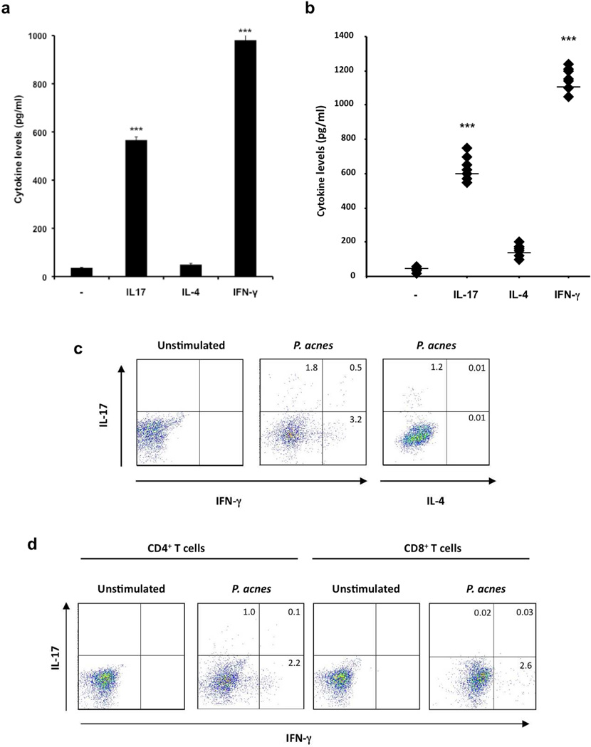 P. acnes stimulate production of IL-17A and IFN-γbut not IL-4 in PBMCs PBMCs were cultured (2–5 × 10 6 /ml) in the presence of P. acnes sonicate (2 µg/ml) or P. acnes clinical isolates for 7 days. a) Levels of IL-17, IL-4 and IFN-γaccumulated in culture supernatants were measured using ELISA. Experiments were performed at least five times using PBMCs from five different donors with similar results. b) PBMCs (2–5 × 10 6 /ml) were cultured either in the presence or absence of seven P. acnes clinical isolates (C1–C7). Levels of IL-17, IL-4, and IFN-γaccumulated in culture supernatants were measured using ELISA. Experiments were performed at least three times using PBMCs from three different donors with similar results. The overall group effect was statistically significant (p