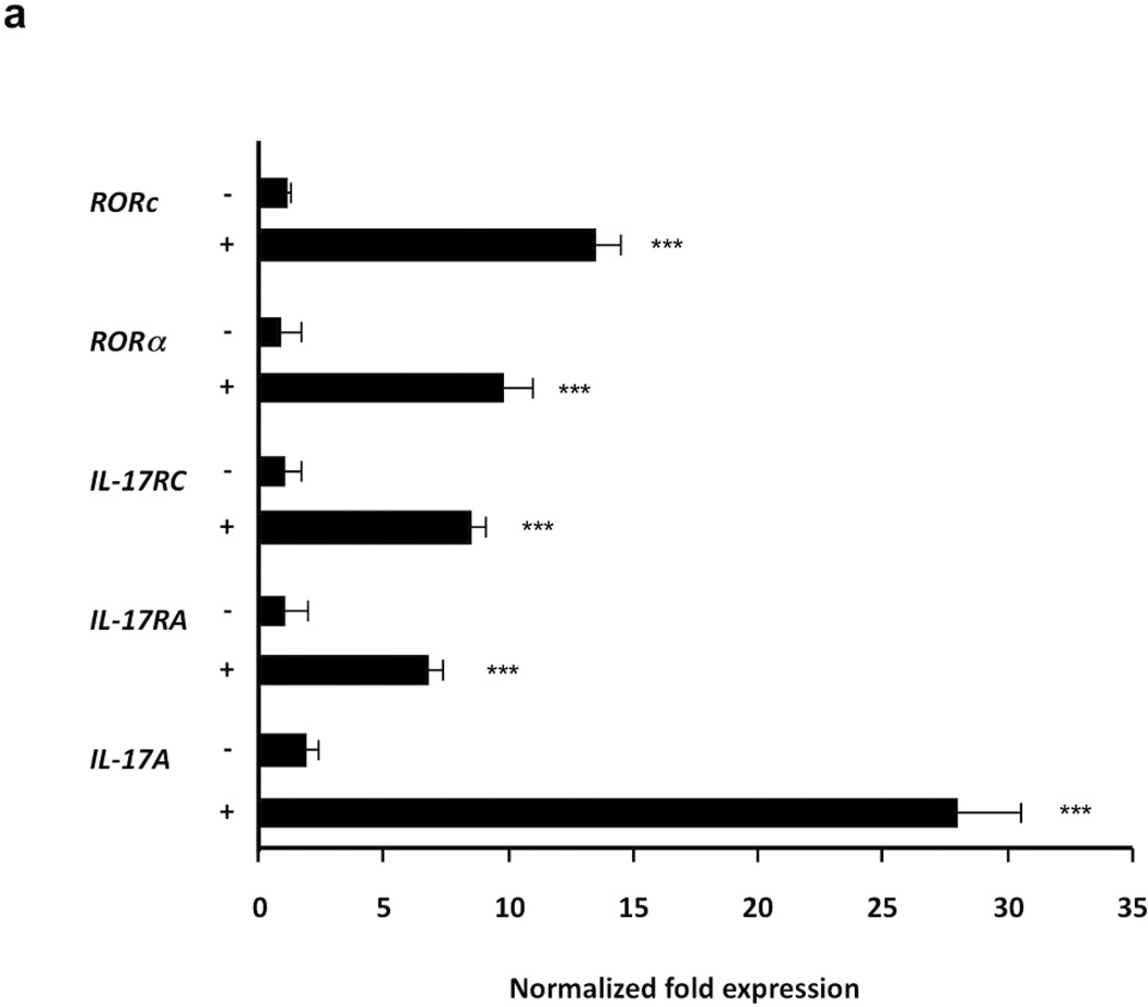 Induction of IL-17, IL-17RA , IL-17RC, RORc and RORa mRNAs expression in PBMCs stimulated with P. acnes PBMCs were cultured (2–5 × 10 6 /ml) with P. acnes sonicate (2 µg/ml). Real time PCR of IL-17 , IL-17RA , IL-17RC, RORc and RORa mRNA expression was analyzed 24 hours following P. acnes stimulation. Gene expression was normalized to the housekeeping genes GAPDH and quantified by the comparative method 2 −ΔΔCT . Data are representative of four independent experiments. Data represent mean ± SD (***p ≤ 0.001)