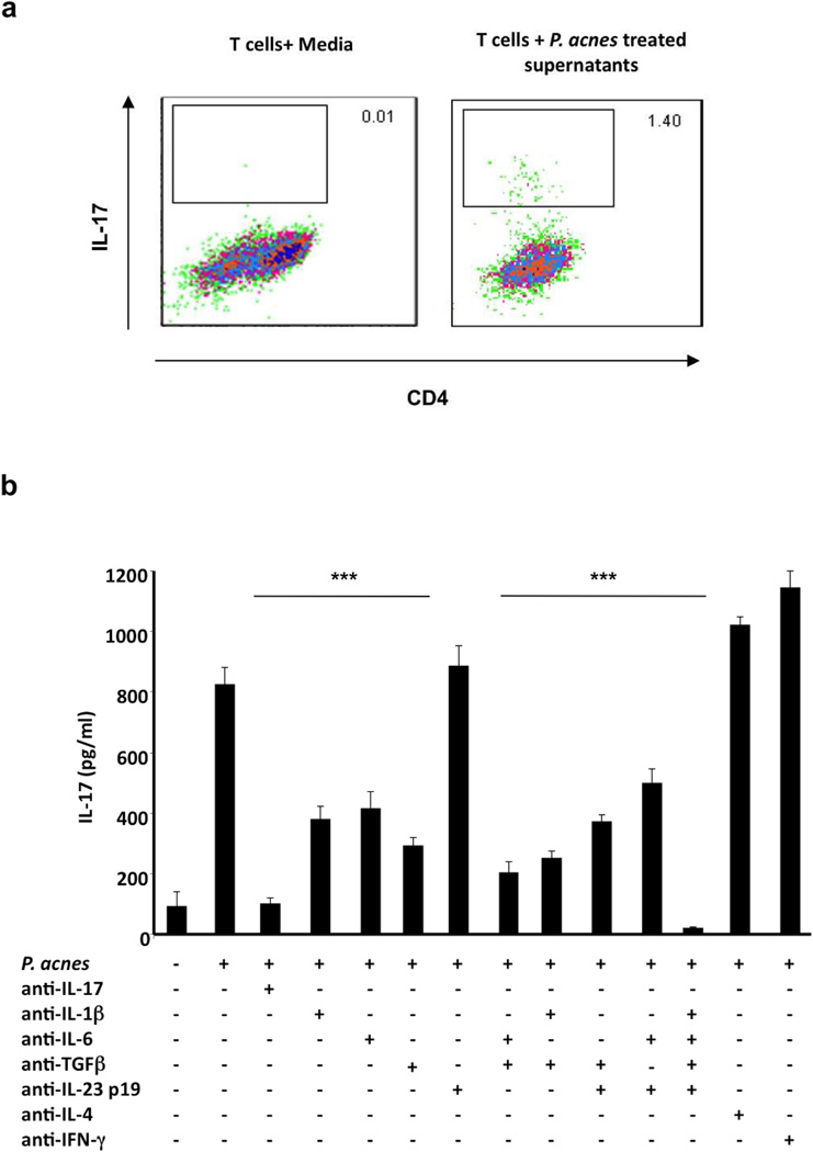 Supernatants from PBMCs treated with P. acnes differentiate naïve CD4 + T cells to IL-17 producing T cells a) PBMCs (2–5 × 10 6 /ml) were stimulated overnight with P. acnes sonicate (2 µg/ml). Culture supernatants were then collected and used to stimulate naive CD4 + CD45RA T cells for seven days in 96 well plates with plate bound anti-CD3 and soluble CD28. Cells were harvested and intracellular cytokine staining for IL-17 was performed. Each panel is representative of three independent experiments. b) PBMCs (2–5 × 10 6 /ml) were cultured with IL-17, IL-1β, IL-6, TGF-β, IL-23p19, IL-4 and IFN-γneutralizing antibodies for one hour followed by seven days of stimulation with P. acnes . IL-17 production was then measured using ELISA. Data are representative of four independent experiments. Data represent mean ± SD (** p ≤ 0.05, ***p ≤ 0.001)