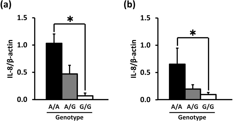 Association of the TNF-α promoter genotype and IL-8 mRNA expression levels in PMNs (a) and PBMCs (b) before culturing. The data are expressed as means ± SEM (n = 4, n = 7 and n = 3 for A/A, A/G and G/G in PMNs; n = 4, n = 8 and n = 6 for A/A, A/G and G/G in PBMCs). The asterisk denotes significantly different values (P