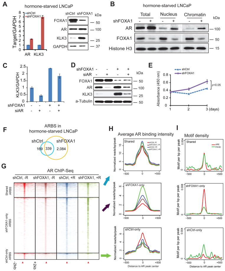 FOXA1 downregulation results in AR-chromatin binding in the absence of androgen (A) QRT-PCR and immunoblot analyses of AR, FOXA1 and KLK3 were performed in hormone-starved control and shFOXA1 LNCaP cells. GAPDH was used as a loading control. Error bars indicate n=3, mean±s.e.m., p