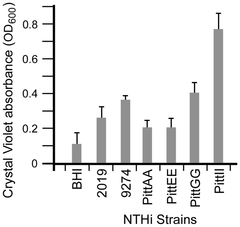 Biofilm formation is variable between NTHi strains. Biofilm quantification using crystal violet assay showed the variability in biofilm formation between the NTHi strains in this study. Relative Biofilm Quantity was measured as OD 600 of crystal violet in DMSO; higher absorbance indicated more biofilm production. The PittAA and PittEE strains showed the least amount of biofilm attachment to the growth surface while PittII showed the most. The other three strains (2019, 9274 and PittGG) formed intermediate amounts of biofilm material (t-test analysis in Table S2 ).
