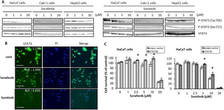 Signal transduction alterations involved in STAT3 after treatment with sorafenib and sunitinib and effects of STAT3C on cytotoxicity of sorafenib and sunitinib. (A) HaCaT, Caki-1, and HepG2 cells were incubated with a medium that included sorafenib or sunitinib at the indicated concentrations for 2 h. Thereafter, Western blot analysis was performed using total cell lysates. (B) Immunostaining images. HaCaT cells were treated with sorafenib (10 µM), sunitinib (10 µM), or DMSO (Control; cont) for 2 h and were fixed and incubated with an anti-STAT3 antibody, followed by incubation with FITC-conjugated anti-rabbit IgG (green), and then visualized with the IN Cell Analyzer 2000. Nuclear translocation of STAT3 was determined with cell population analysis by determining the nucleus/cytoplasm intensity ratio of green fluorescence. Bar shows 50 µm. (C) Effects of STAT3C transfection on sorafenib- and sunitinib-induced cell growth inhibition. HaCaT cells transiently transfected with STAT3C or an empty vector were preincubated for 24 h, followed by incubation in medium containing sorafenib or sunitinib at the indicated concentrations for 48 h. Cell viability was determined by WST-8 colorimetric assay. *p