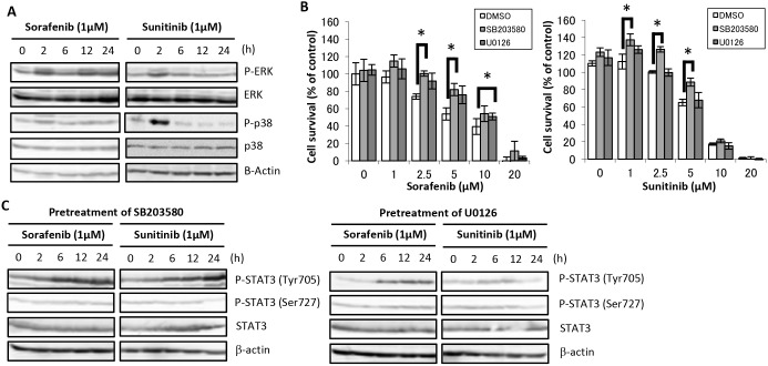 Effects of sorafenib and sunitinib on MAPK activation in HaCaT cells and effects of MAPK inhibitor on sorafenib and sunitinib-induced cell growth inhibition and signal transduction. (A) Alterations in MAPKs signal transduction. HaCaT cells were incubated in medium containing 1 µM sorafenib or sunitinib for the indicated times, followed by Western blot analysis using total cell lysates. (B) Effects of MAPK inhibitor on sorafenib- and sunitinib-induced cell growth inhibition. HaCaT cells were incubated with medium containing sorafenib at the indicated concentrations for 48 h after pretreatment with either U0126 (MEK1/2 inhibitor, 10 µM), SB203580 (p38 MAPK inhibitor, 10 µM), or DMSO (solvent) for 2 h. Cell viability was determined by WST-8 colorimetric assay. *p