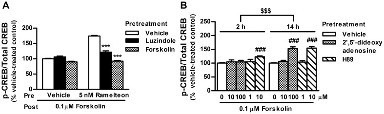Blockade of ramelteon-induced potentiation of CREB phosphorylation by luzindole and <t>forskolin.</t> (A) INS-1 cells were incubated with ramelteon (5 nM) in the absence or presence of luzindole (15 µM) or forskolin (0.1 µM) for 14 h. After drug washout, the cells were subjected to a second round of forskolin stimulation (0.1 µM) for 30 min. (B) INS-1 cells were incubated with 2′,5′-dideoxyadenosine (10 or 100 µM) and H89 (1 or 10 µM) for 2 or 14 h. After drug washout, the cells were stimulated with forskolin (0.1 µM) for 30 min. Values are expressed as the ratio of phosphorylated CREB to total CREB in the vehicle-pretreated control (100%). Data are presented as means ± SEM (n = 3–6) and were analyzed using 2-way analysis of variance followed by Dunnett's test. *** P