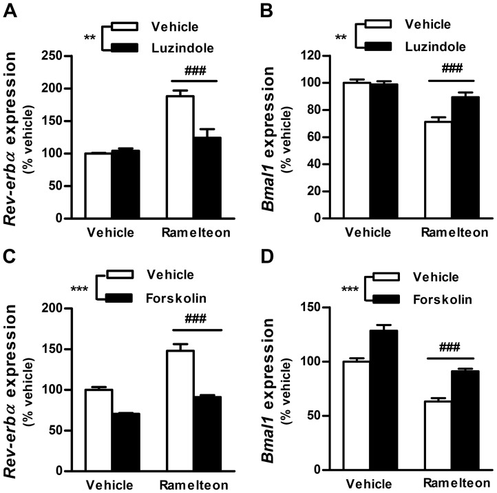 Blockade of ramelteon-induced Rev-erbα expression by luzindole and forskolin. INS-1 cells were incubated with ramelteon (A and B, 5 nM; C and D, 10 nM) in the absence or presence of luzindole (A and B, 15 µM) or forskolin (C and D, 0.1 µM) for 14 h. mRNA expression of Rev-erbα and Bmal1 was measured using TaqMan polymerase chain reaction and normalized to that of the housekeeping gene cyclophilin A. Values are expressed as a percentage of vehicle-treated controls. Data are presented as means ± SEM (n = 4−6) and were analyzed using 2-way analysis of variance followed by Dunnett's test. ** P
