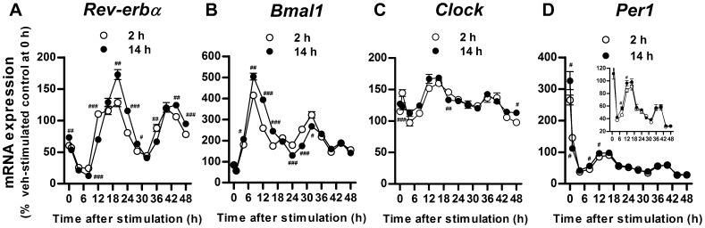Time course of clock gene expression after ramelteon pretreatment followed by forskolin and high glucose stimulation. INS-1 cells were pretreated with ramelteon (10 nM) for 2 h or 14 h (A–D). After the washout period, the cells were stimulated with forskolin (0.1 µM) and high glucose (12 mM) for 1.5 h. Following removal of the stimulant, the cells were incubated in a serum-free medium for 0–48 h. Clock gene expression was assessed by TaqMan polymerase chain reaction and normalized to that of the housekeeping gene cyclophilin A. Values are expressed as the percentage of vehicle-stimulated controls at 0 h after stimulant removal. Data are presented as means ± SEM (n = 3) and were analyzed using 2-way analysis of variance followed by Dunnett's test. # P