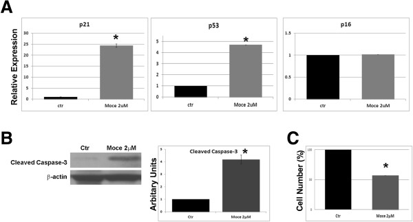 Mocetinostat treatment elevated levels of p21/p53 and Caspase-3 in cardiac fibroblasts. CD90+ cells were treated with Mocetinostat for 7 days. (A) Gene expression of p21, p53, and p16 was analyzed with real-time PCR. Mocetinostat induced expression of p21 and p53 in CD90+ cells. (B) Cleaved Caspase-3 levels were measured with western blot analysis. Mocetinostat induced upregulation of Caspase-3 levels in CD90+ cells. (C) Reduction in cell numbers upon Mocetinostat treatment was quantified by cell counting. Error bars indicate S.E. (n = 4) P