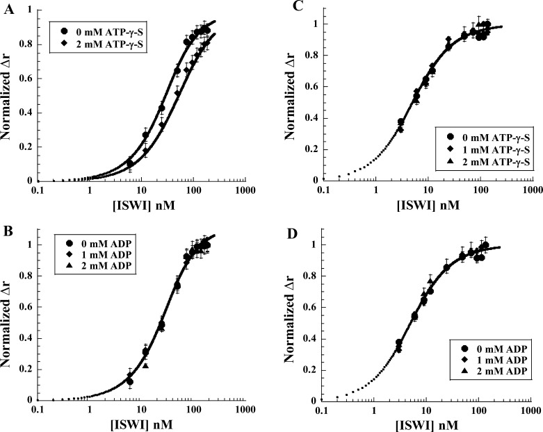 Fluorescence anisotropy measurements (Δ r ) of equilibrium binding of ISWI to DNA and nucleosomes in the presence of nucleotides. (A) Equilibrium binding to a 20 bp FITC-labeled DNA substrate (25 nM) in the presence of ATP-γ-S. These data were analyzed using Scheme 1 as described in Experimental Procedures . The solid lines in the figure represent the fits of the data to this scheme, which returned the following values: 1/β A = 140 ± 30 μM, 1/β A,1 = 390 ± 70 μM, and 1/β 1,A = 42 ± 8 nM. (B) Equilibrium binding to a 20 bp FITC-labeled DNA substrate (25 nM) in the presence of ADP. The solid line in this figure represents the fit of equilibrium DNA binding data collected in the absence of nucleotide (Figure 1 A). (C) Equilibrium binding to an Alexa488-labeled 10N5 nucleosome substrate in the presence of ATP-γ-S. (D) Equilibrium binding to an Alexa488-labeled 10N5 nucleosome substrate in the presence of ADP. The solid lines in panels C and D are the fits of the equilibrium nucleosome binding data collected in the absence of nucleotides (Figure 1 C).