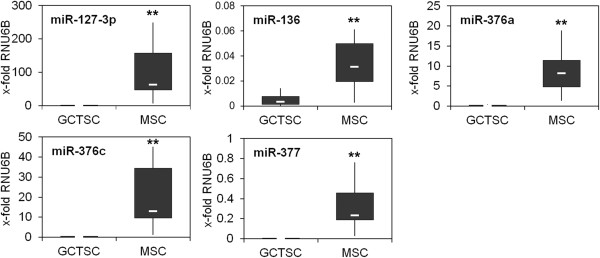 Silencing of specific microRNAs in GCTSCs. Total RNA including microRNAs was extracted from cultured GCTSCs (n = 10) and MSCs (n = 10) and expression of microRNAs was quantified relative to the expression of the small nuclear RNA RNU6B. The white lines indicate the median, the lower and upper boundaries of the box indicate the 25th and 75th percentile. The whiskers indicate the highest and lowest values. (**p