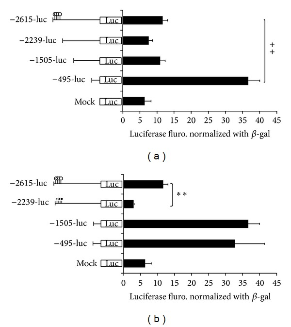 Methylation and deletion analysis of OPN promoter in 293T cells. The match-like bar with black circle represents the methylation CpG site; white circle of match bar indicated the unmethylation CpG sites. PGL3 vector as standard; in 293T cell line; PGL3-enhance vector as negative control; cell lysate as the background; pCMV-b-gal as internal control. The relative value is adjusted by cell lysate; −495 M-luc indicated the methylation in PGL3 backbone with Hha I and Hpa II methyltransferase. (** P