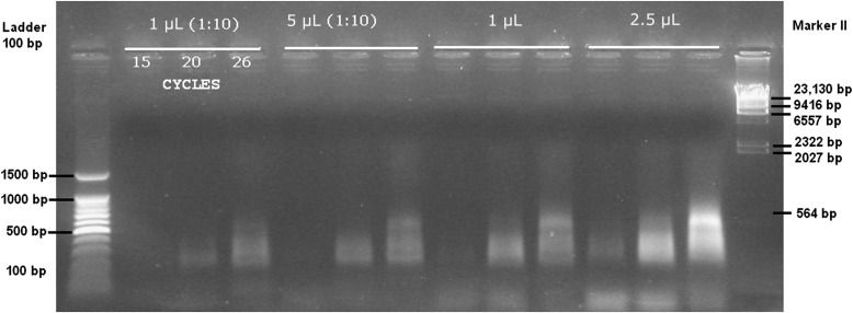 Image of several patterns amplified after the first enrichment (step 5) using different concentrations of template (ligation reaction) and the primers Eco I-0 and <t>Mse</t> I-0 (preselective modified primers; Vos et al., 1995 ). For each amplification template, 4 μL was loaded. The first lane is a 100-bp DNA ladder (BenchTop 100-bp DNA Ladder, Promega Corporation, Madison, Wisconsin, USA), and the last lane is Marker II (AppliChem GmbH, Darmstadt, Germany). The numbers above the white line indicate the quantity of ligation template used for the PCR enrichment, and numbers below the white line indicate the number of PCR cycles.
