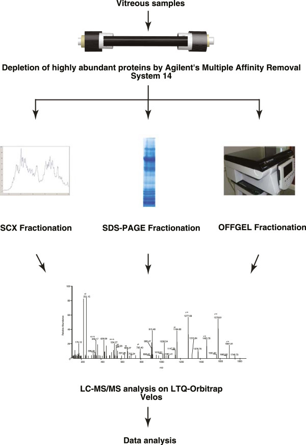 Experimental design for proteomic characterization of vitreous humor. Pooled vitreous humor samples were depleted of abundant proteins using Agilent's MARS 14 column followed by in-gel digestion, in-solution digestion and OFFGEL electrophoresis. The samples were analyzed on LTQ-Orbitrap Velos mass spectrometer.