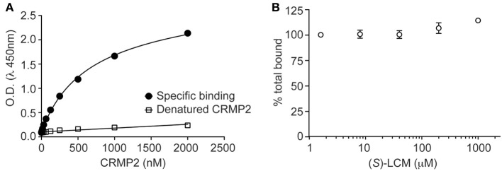 ( S )-LCM does not affect tubulin-CRMP2 binding. (A) 96-well plates coated with 200 ng tubulin were incubated with increasing concentrations of recombinant CRMP2 or heat-denatured CRMP2. The Y axis displays the OD 450 absorbance of the ELISA using CRMP2-specific antibodies. CRMP2 bound to tubulin with half-saturation concentration of ~607 nM. Binding of heat-denatured CRMP2 demonstrated non-saturable background binding to tubulin. (B) Competitive binding assay revealed that ( S )-LCM does not abrogate the binding of CRMP2 to tubulin. For (A,B) , all measurements were performed in sextuplicate and error bars indicate standard error of the mean. Most of the error bars are smaller than the symbols.