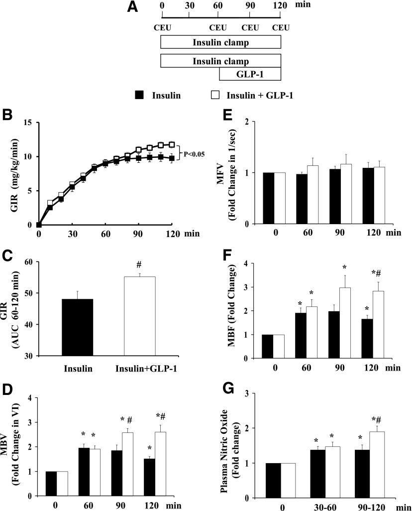 GLP-1 enhances insulin-mediated glucose disposal and muscle microvascular recruitment. Each rat received a 2-h euglycemic insulin clamp (3 mU/kg/min) for 120 min with or without GLP-1 infusion (30 pmol/kg/min) superimposed between 60 and 120 min. CEU measurements were done at 0, 60, 90, and 120 min. A : Study protocol. B : GIR during insulin clamp. C : GIR AUC between 60 and 120 min. D : MBV. E : MFV. F : MBF. G : Plasma NO levels. n = 4–15 each. Compared with 0 min, * P