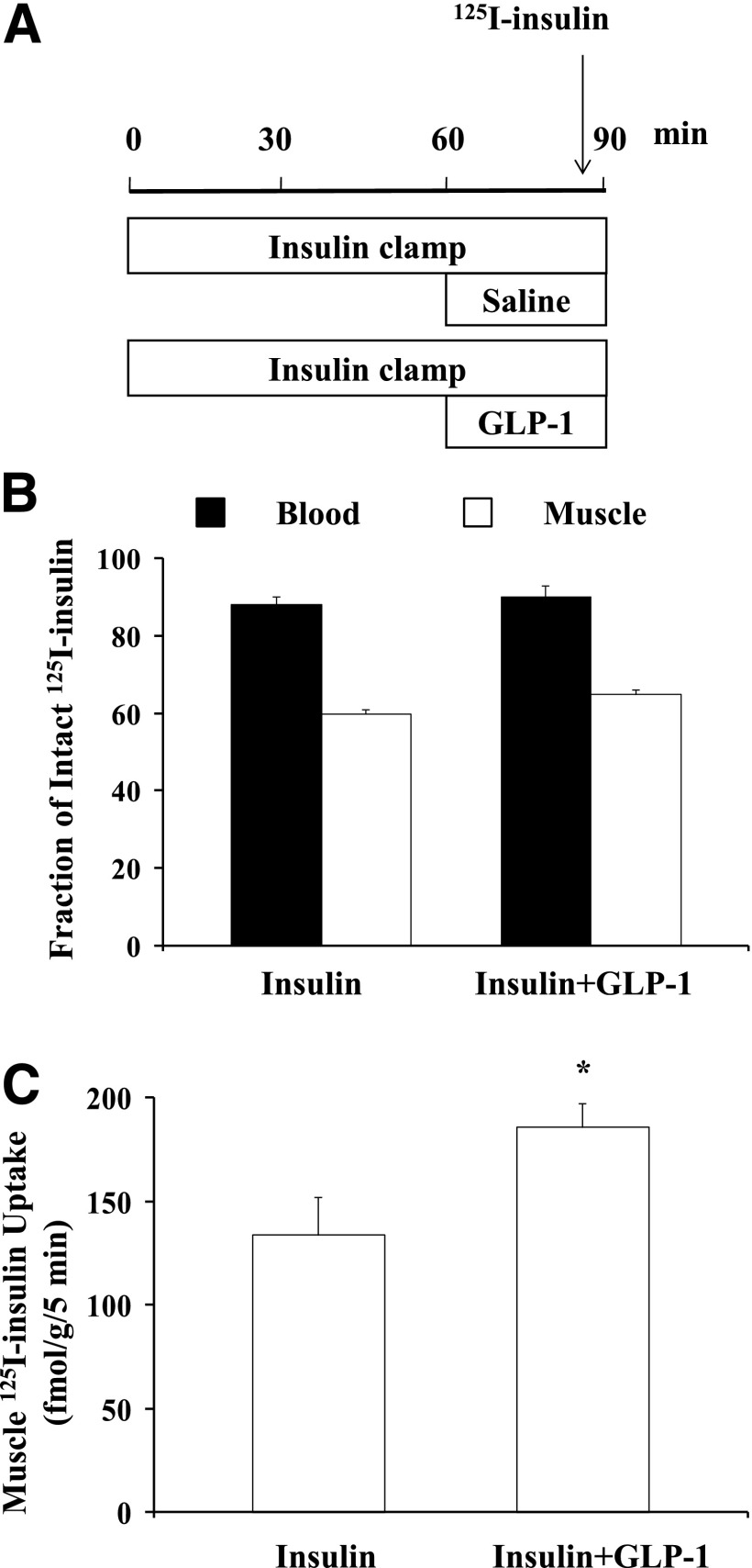 GLP-1 increases muscle 125 I-insulin uptake. Each rat received a 90-min euglycemic insulin clamp (3 mU/kg/min) with or without simultaneous GLP-1 infusion (30 pmol/kg/min) for the last 30 min. A bolus intravenous injection of 125 I-insulin (1.5 µCi) was given 5 min before the end of insulin ± GLP-1 infusions. Blood and skeletal muscle were collected for determination of intact 125 I-insulin. A : Study protocol. B : Fraction of intact 125 I-insulin in blood and muscle. C : Muscle insulin uptake. n = 5 each. Compared with insulin alone, * P