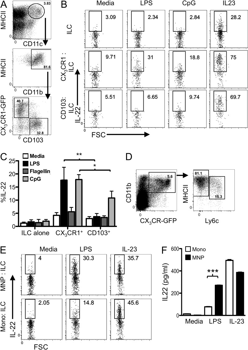 TLR-stimulated CX 3 CR1 + MNPs are stronger inducers of ILC3 production of IL-22 than CD103 + CD11b + DCs and monocytes. (A–C) CD103 or CX 3 CR1 + MHCII + CD11c + CD11b + cells were isolated from the lamina propria of CX 3 CR1 GFP/+ mice (sort strategy shown in A and co-cultured with Lin − RORγt-GFP + ILCs with or without the indicated bacterial TLR ligands or IL-23. IL-22 was assessed by intracellular staining of CD90.2 + ILCs after 18 h. A representative flow cytometry plot is shown in B. (C) Percent IL-22 + ILCs is shown from seven independent experiments. **, P ≤ 0.01; *, P ≤ 0.05. One way ANOVA with Bonferroni's correction. Error bars represent SEM. (D–F) Ly6C + MHCII lo (monocytes) and Ly6C − MHCII hi (MNPs) were isolated from CX 3 CR1 + CD11b + lamina propria cells (sort strategy is shown in D and co-cultured with intestinal ILCs with LPS or IL-23 as indicated. Intracellular cytokine staining for IL-22 is shown after 18 h (E). Supernatants were harvested after 18 h and IL-22 production quantitated by ELISA (F). Results are representative of two independent experiments performed in triplicate. ***, P ≤ 0.001. One-way ANOVA with Bonferroni correction. Error bars represent the SEM.