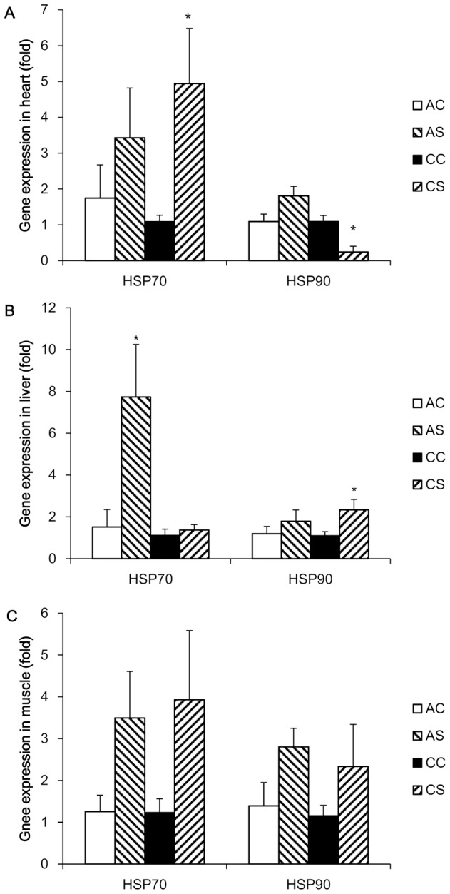 Normalized gene expression of HSP 70 and 90 after acute and chronic heat challenges. Expression of HSP 70 and 90 genes was determined by real time PCR using SYBR green dye and the 2 −ΔΔCt method was used to calculate mRNA level of each gene, where the average mean of the unstressed group was used as the calibrator. Each PCR reaction was conducted in triplicate and the geometric mean of internal references, β-actin and GAPDH, was used to normalize the expression of targets genes. Values are expressed as means ± SE of data from 5–6 individual tissue samples. * indicates significant differences (P