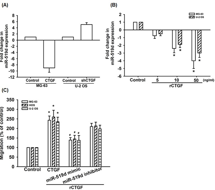 CTGF increases cell migration by suppressing miR-519d expression (A) The miR-519d expression in indicated cells was examined by qRT-PCR. (B) MG-63 cells and U-2 OS cells were incubated with rCTGF (5-50 ng/ml) for 24 h, miR-519d expression examined by qRT-PCR. (C) Cells were transfected with miR-519d mimic or inhibitor for 24 h and cell migration examined by Transwell assay. Results are expressed as mean ± SEM. *, p