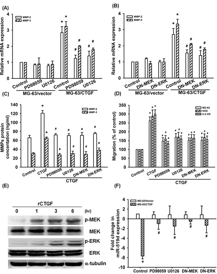 MEK/ERK pathway is involved in CTGF-induce migration and suppression of miRNA-519d (A-D) Cells were pretreated with PD98059 (10 μM) and U0126 (10 μM) for 30 min or transfected with MEK1 and ERK2 mutant for 24 h, the MMPs expression and cell migration was examined by q-PCR, ELISA, and Transwell assay. (E) MG-63 cells were incubated with rCTGF (50 ng/ml) for indicated time intervals, MEK and ERK phosphorylation examined by western blot. (F) Cells were pretreated with PD98059 (10 μM) and U0126 (10 μM) for 30 min or transfected with MEK1 and ERK2 mutant for 24 h followed, the miR-519d expression was examined by qRT-PCR. Results expressed as mean ± SEM. *, p