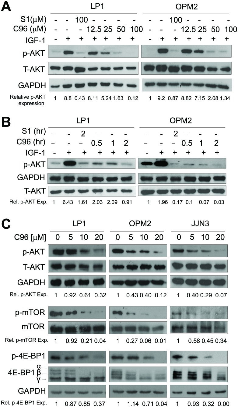 C96 inhibits AKT and mTOR signaling ( A ) LP1 and OPM2 were starved overnight, then treated with C96 at the indicated concentrations, or 100 μM of S14161 for 2 hrs, followed by IGF-1 (100 ng/mL) for 15 min. Cells were collected for the analysis of the expression of p-AKT and total AKT (T-AKT) by immunoblotting. ( B ) LP1 and OPM2 cells were starved overnight, then treated with C96 (50 μM) for different time periods, or S14161 (100 (μM) for 2 hrs, followed by IGF-1 (100 ng/mL) for 15 min. Cells were for the analysis of the expression of p-AKT and T-AKT by immunoblotting. ( C ) LP1, OPM2, and JJN3 cells were treated with C96 at the indicated concentrations for 24 hrs. Cell lysates were prepared and subjected to immunoblotting assay against p-AKT, AKT, p-mTOR, mTOR, p-4E-BP1, and 4E-BP1. GAPDH was used as a loading control.