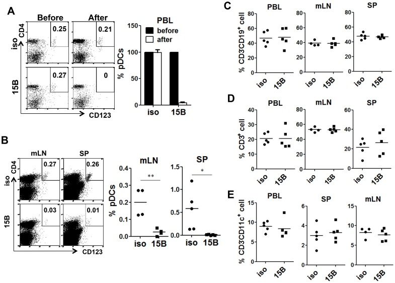 Specific depletion of human pDC in lymphoid organs in vivo with a human pDC-reactive monoclonal antibody. Humanized Mice were treated with either 15B or isotype control (iso) antibody for 3 times on days -5, -3, -1 prior to termination. Percentages of pDC (Lin − CD4 + CD123 + ) in total human leukocytes (CD45 + ) are analyzed. ( A ) Representative FACS plots and summarized data show relative pDC frequencies before and after antibody treatment in the peripheral blood (n = 7). ( B ) Representative FACS plots and summarized data show pDC depletion by 15B in mesenteric lymph nodes (mLN) and spleen (SP, isotype n = 4; 15B n = 5). All bars in dot graphs indicate median value. Error bars indicate standard deviations (SD). * and ** indicate p