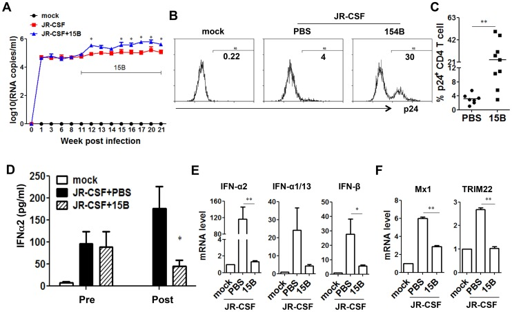 Depletion of pDC during chronic HIV-1 infection increases HIV-1 replication associated with reduced IFN-I expression. Humanized mice were infected HIV-JRCSF and were treated weekly with 15B or control at 11 weeks post-infection and terminated at 21 weeks post-infection (mock, n = 6; JR-CSF+control, n = 9; JR-CSF+15B, n = 9). ( A ) Plasma HIV-1 RNA levels (genome copy#×log10/ml) at each time point were analyzed by real-time PCR. ( B ) Representative FACS histograms and summarized data ( C ) show percentages of HIV p24-positive CD4 T cells (CD3 + CD8 − ) in the spleen. ( D ) The production of IFNα2 in the plasma, from mock infected (n = 4), JR-CSF+PBS (n = 5) and JR-CSF+15B (n = 5) at either 11 wpi (pre-) or 21 wpi (post-), was measured by Luminex. ( E ) The mRNA levels of IFN-I genes or ISGs Mx1 and TRIM22 ( F ) in purified human CD45 + cells from spleens (n = 5). All bars in dot graphs indicate median value. Error bars indicate standard deviations (SD). * and ** indicate p