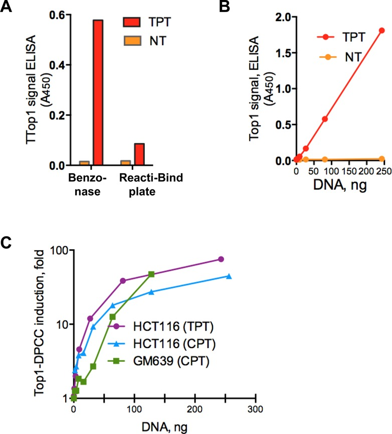 Detection of Top1-DPCC by a direct ELISA immunoassay. ( A ) Comparison of ELISA immunoassays for Top1-DPCC using DNA isolates (80 ng DNA per well) from untreated (NT) or TPT-treated HCT116 cells that were adsorbed to standard plates following digestion with Benzonase nuclease (left) or to Reacti-Bind-coated plates (right). ( B ) Linearity range and sensitivity of ELISA immunoassay for detection of Top1-DPCC in lysates from untreated (NT) or TPT-treated HCT116 cells, assayed in samples containing indicated initial amounts of DNA digested with Benzonase prior to adsorption to plates. ( C ) Fold induction of Top1-DPCC (ratio of treated to untreated samples) in HCT116 cells treated with CPT or TPT and GM639 cells treated with CPT, assayed in samples containing indicated initial amounts of DNA digested with Benzonase prior to adsorption to plates.