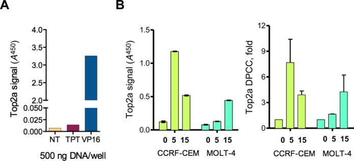 Detection of Top2a–DNA adducts by ELISA-based RADAR assay. ( A ) Specificity of detection by ELISA assay using an anti-Top2a antibody. ELISA assays were performed with DNA isolates of CCRF-CEM cells treated with cognate (VP16) or non-cognate (TPT) topoisomerase poison, and compared to an untreated control (NT). ( B ) Kinetics of Top2a–DPCC formation. Top2a-DPCC were detected by ELISA-based RADAR of DNA isolates (0.5 μg DNA per well) from CCRF-CEM and MOLT4 cells treated with 50 mM VP16 for indicated times and lysed in LS2. Left panel shows averages of replicates of A 450 reading from a representative ELISA experiment with anti-Top2a antibodies. Right panel shows averages of fold Top2a-DPCC induction calculated from two ELISA experiments performed on different days. Error bars represent standard deviation.