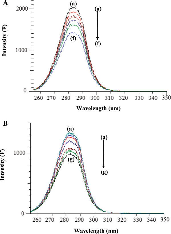 Synchronous fluorescence spectra of BSA and HSA. A. Synchronous fluorescence spectra of BSA-HU: For Δλ = 60 nm. Concentration of HU: (a) 0, (b) 5, (c) 10, (d) 15, (e) 20 and (f) 25 μM. The concentration of BSA was 5.0 μM. B. Synchronous fluorescence spectra of HSA-HU: (A) For Δλ = 60 nm. Concentration of HU: (a) 0, (b) 5, (c) 10, (d) 15, (e) 20, (f) 25 and (g) 30 μM. The concentration of HSA was 5.0 μM.
