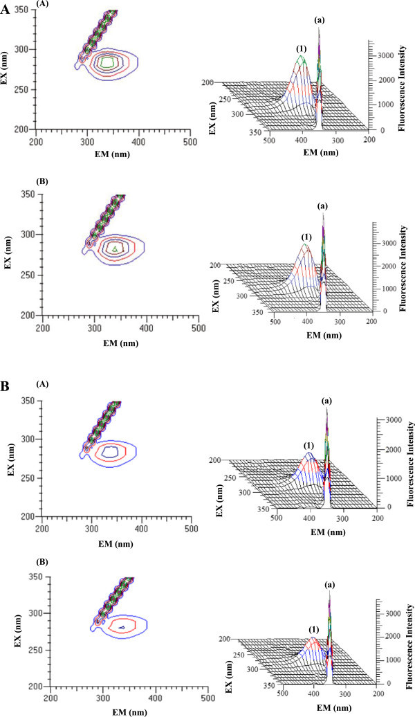 The 3 - D fluorescence spectra of <t>BSA</t> and <t>HSA.</t> A. The 3-D fluorescence spectra and corresponding contour diagrams of BSA (A) and BSA-HU (B). The concentration of protein was 5 μM and that of HU was 20 μM. B. The 3-D fluorescence spectra and corresponding contour diagrams of HSA (A) and HSA-HU (B) . The concentration of protein was 5 μM and that of HU was 20 μM.