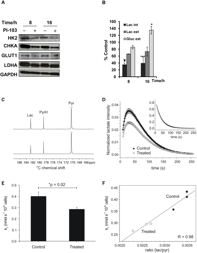 Investigation of mechanisms underlying NMR-detected changes in the levels of choline metabolites and lactate following treatment of SF188 pediatric glioblastoma cells with PI-103 (5×GI 50 ). (A) Representative Western blots showing changes in protein expression levels of enzymes involved in choline metabolism (CHKA) and glucose metabolism including: GLUT1, HK2 and LDHA, at selected time points post treatment with PI-103. GAPDH was used as a loading control. (B) Quantitative measurement of 1 H-NMR detected percentage changes in the levels of lactate (Lac, internal external) and glucose (external) at selected time points post treatment with PI-103 relative to controls, 8 hours n = 2. Results are expressed as percentage of treated to control and presented as the mean ± SD (error bars). Statistically significant different from the control *p≤0.05, **p