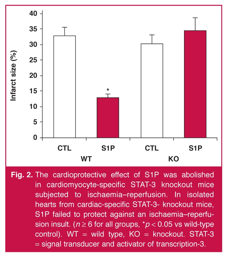 The cardioprotective effect of S1P was abolished in cardiomyocyte-specific STAT-3 knockout mice subjected to ischaemia–reperfusion. In isolated hearts from cardiac-specific STAT-3- knockout mice, S1P failed to protect against an ischaemia–reperfusion insult. ( n ≥ 6 for all groups, * p