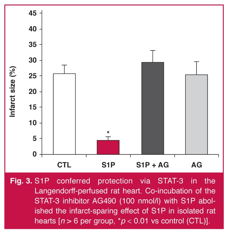 S1P conferred protection via STAT-3 in the Langendorff-perfused rat heart. Co-incubation of the STAT-3 inhibitor AG490 (100 nmol/l) with S1P abolished the infarct-sparing effect of S1P in isolated rat hearts [ n > 6 per group, * p