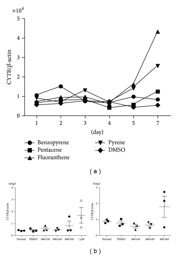 The change of mtDNA copy number after PAHs exposure. mtDNA copy number was increased after exposure of PAHs with different pattern in THP-1 cell line (a) and in vivo zebrafish model (b). mtDNA copy number was dramatically elevated after 5-day treatment of fluoranthene and pyrene in both THP-1 cell line and in vivo zebrafish model. hpf, hours per fertilization in zebrafish; normal, no treatment group; and DMSO, only DMSO (0.1%) treated group.