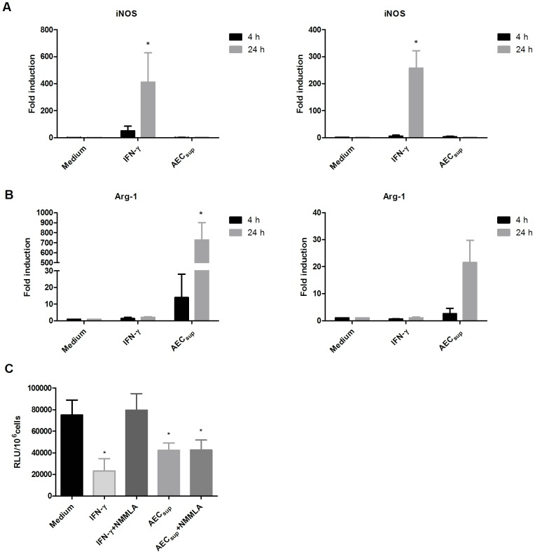 AEC sup has opposite effects to IFN-γ on iNOS, and Arg-1 expression in BMM and PuM and mediates killing through an iNOS independent mechanism. BMM and PuM were infected with GFP-BCG. After infection, cells were treated with either IFN-γ or AEC sup or 1 mM of NG-monomethyl-L-arginine (NMMLA) together with either IFN-γ or AEC sup or left untreated. Total RNA was extracted from both cell-types after 4 and 24 h of treatment and the mean-fold accumulation of a) iNOS, b) Arg-1 ± SD from 3-4 experiments. In c) the effect of the iNOS inhibitor NMMLA on intracellular growth of BCG is shown. Bacterial growth was evaluated by determining RLU. Data are expressed as mean ± SD. The differences between groups of BMM and PuM were analyzed using non-parametric, one-way ANOVA (Kruskal-Wallis) with Dunn's post-test. * significantly different from medium control, P