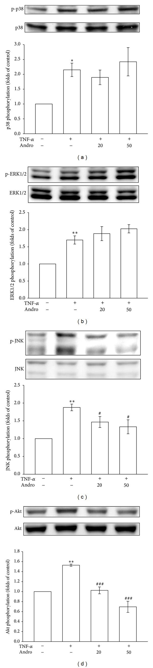 Effects of andrographolide on p38MAPK, ERK1/2, JNK, and Akt signaling pathways in TNF- α -stimulated VSMCs. The VSMCs were treated with PBS (resting group) or pretreated with andrographolide (20 and 50 μ M) or an equal volume of DMSO (solvent control) for 20 min, and TNF- α (10 ng/mL) was subsequently added for 10 min. (a) p38MAPK phosphorylation, (b) ERK1/2 phosphorylation, (c) JNK phosphorylation, and (d) Akt phosphorylation were evaluated as described in Section 2 .* P