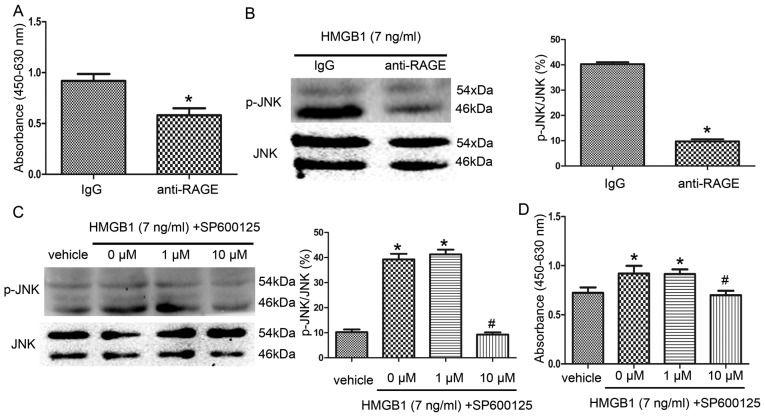 Analysis of signaling pathways involved in HMGB1-mediated NS/PC proliferation by CCK-8 assay (A and D) and western blot analysis (B and C). NS/PCs were cultured for 96 h in NS/PC culture medium containing 7 ng/ml HMGB1. (A) Compared to an IgG control, blockade of RAGE with an anti-RAGE antibody significantly inhibited HMGB1-induced NS/PC proliferation. * P