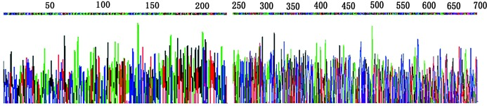 Sequence of the <t>pGEM-T-MHBst</t> 167 by direct sequencing.
