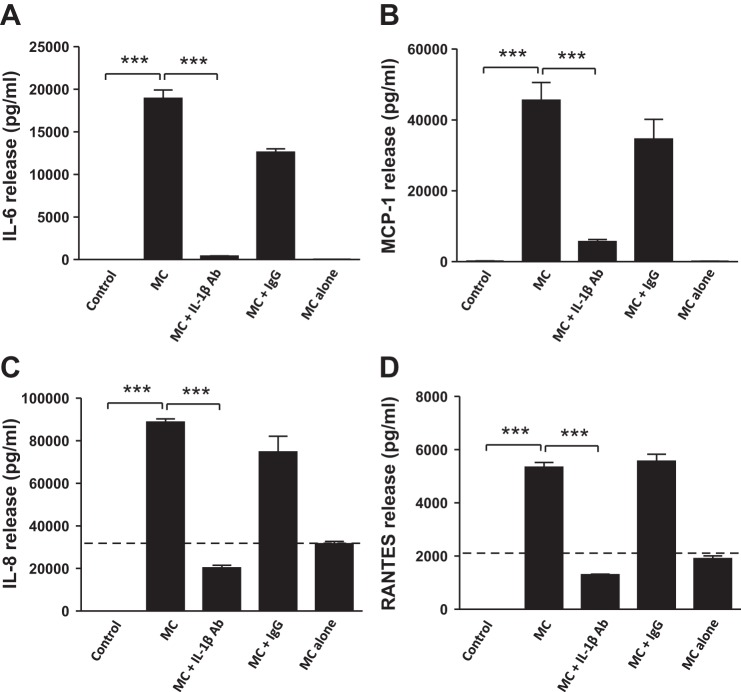 Inhibition of IL-1β activity reverses macrophage-induced cytokine release by human adipocytes. Differentiated adipocytes were incubated with RPMI 1640 (control), MC medium, MC medium neutralized by IL-1β antibody (2 μg/ml), mouse IgG (2 μg/ml, as negative control), or MC medium alone (without cells) for 24 h. The release of IL-6 ( A ), MCP-1 ( B ), IL-8 ( C ) and RANTES ( D ) by adipocytes was measured as protein concentrations in cell culture medium by ELISAs. Data are means ± SD ( n  = 6 per group). *** P
