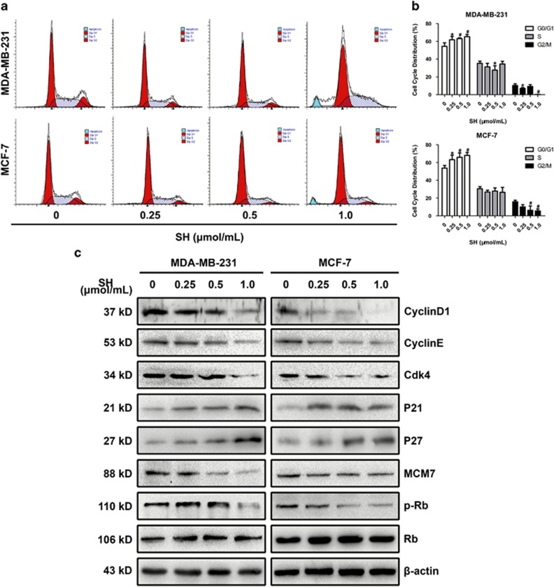 SH induced G1/S cell cycle arrest in human breast cancer cells. ( a and b ) Cells were treated with SH for 48 h and subjected to DNA content analysis using a FACSCAN flow cytometer. ( c ) Proteins involved in G1/S transition were analyzed by western blotting. Cells were treated with SH (0, 0.25, 0.5 and 1.0 μ mol/ml) for 48 h, and total proteins were extracted. Equal protein loading was evaluated by β -actin. Data are represented as mean±S.D. of three independent experiments. * P